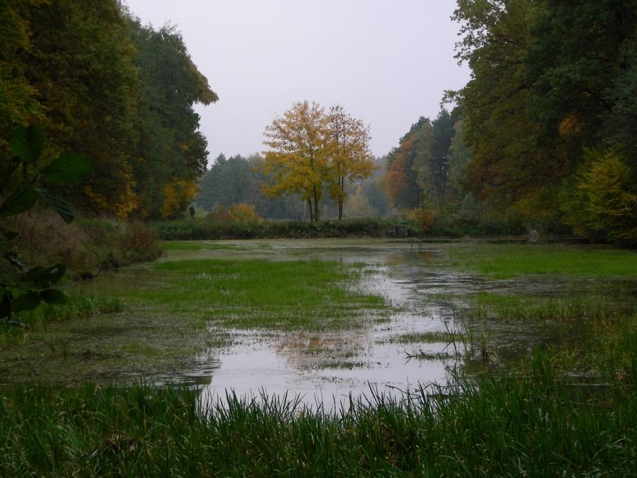 Stawy - charakterystyczny element krajobrazu Gminy Wilamowice. Staw w Starej Wsi (fot. R. Krause)
