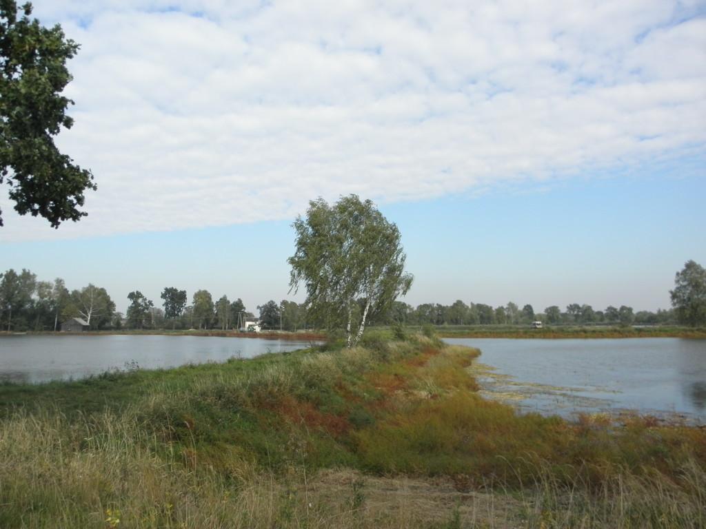 Stawy rybne w Dankowicach
