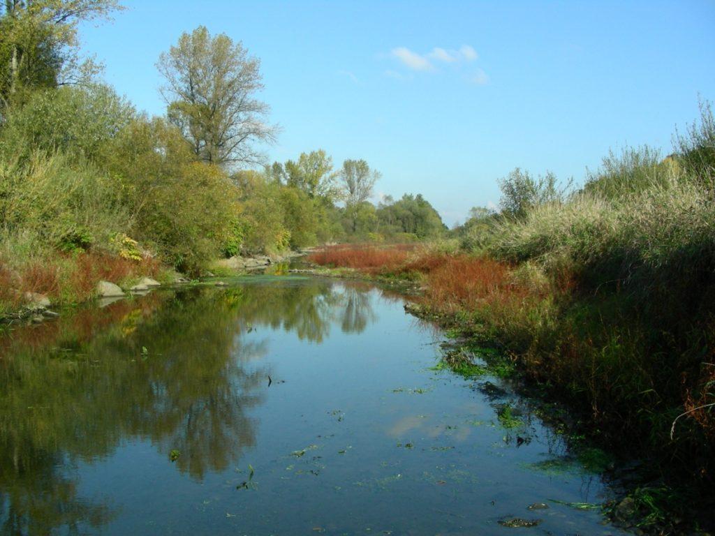 . … i woda stojąca w obszarze Natura 2000 Dolna Soła PLH120083 i obszarze Natura 2000 Dolina Dolnej Soły PLB120004 (fot. R. Krause)